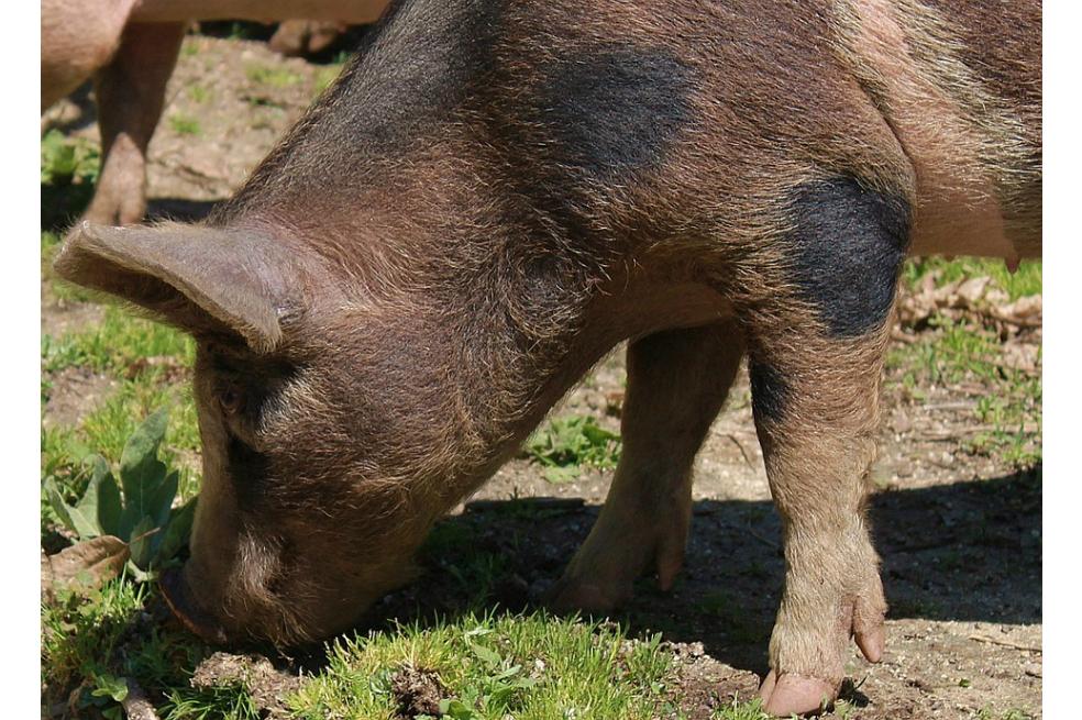 En Venezuela roban animales de zoológico para comer