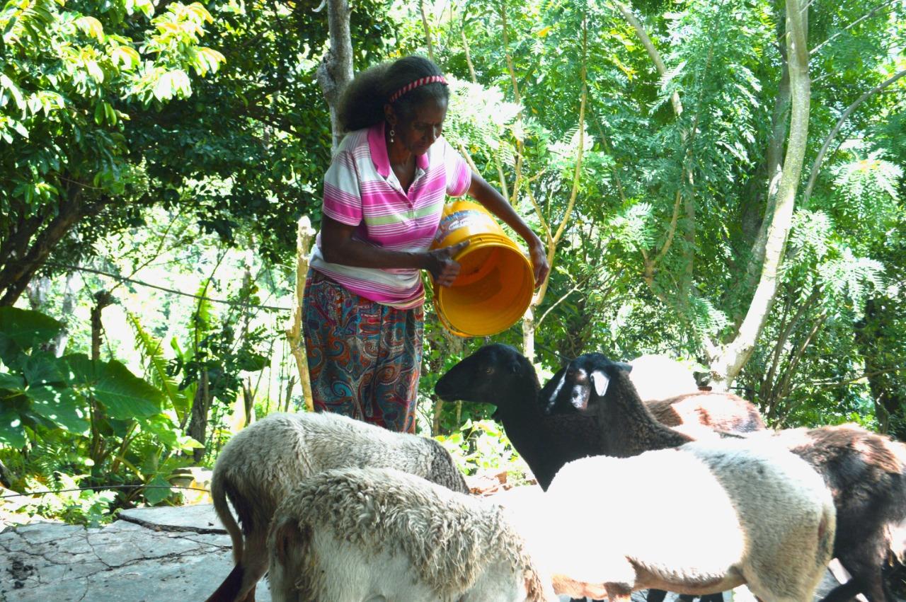 Tenía cría de carneros, además de los diferentes cultivos.