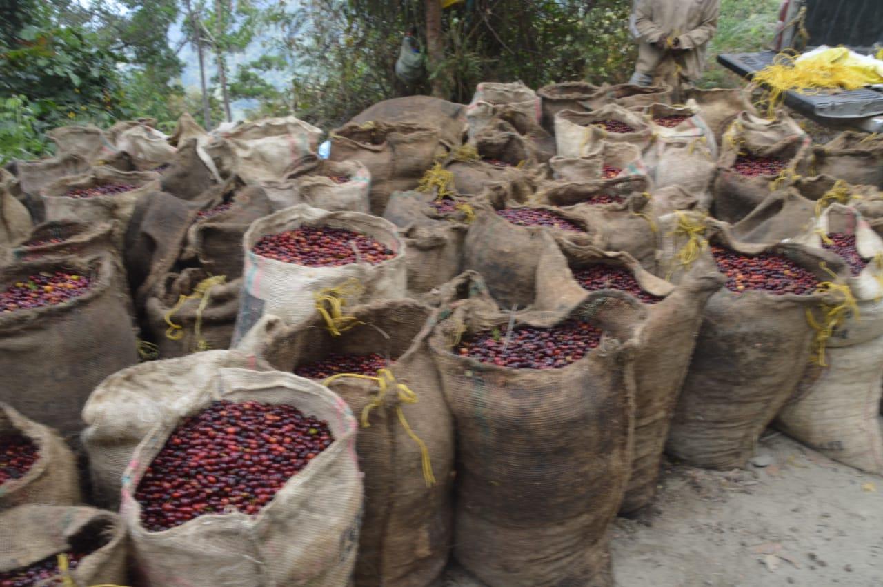El sector cafetero será uno de los grandes beneficiados con una nueva construcción de placa huella.