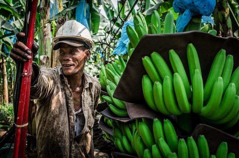 Uno de los temas importantes será la producción sostenible de banano.