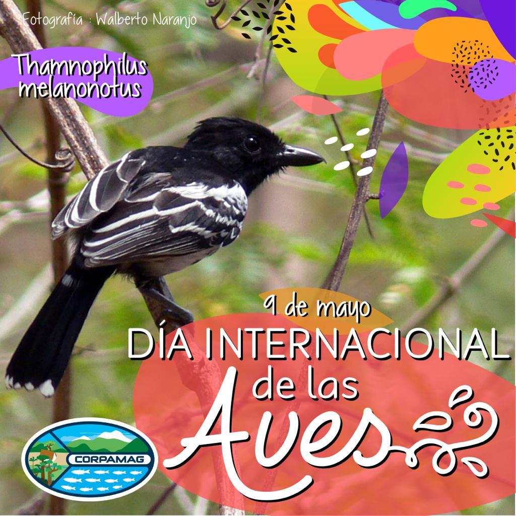Día Internacional de las Aves