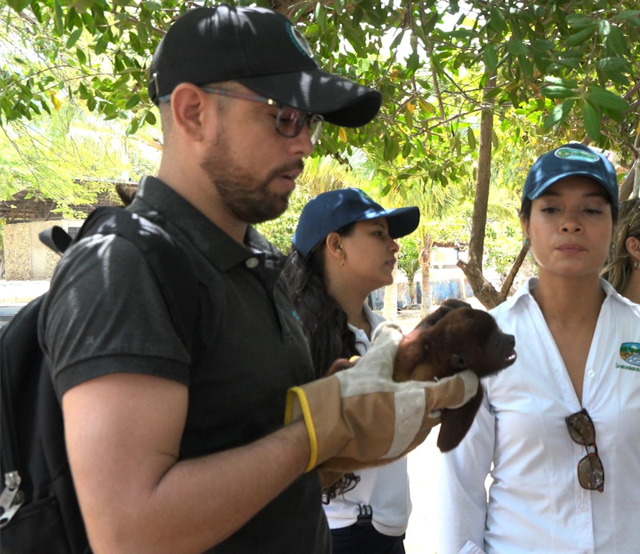 Corpamag y otras entidades rescataron al animal que era tenido en Taganga