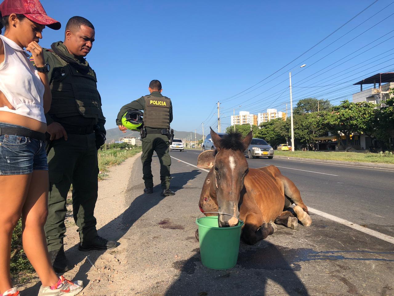 Dos policías llegaron al lugar y luego abandonaron al equino