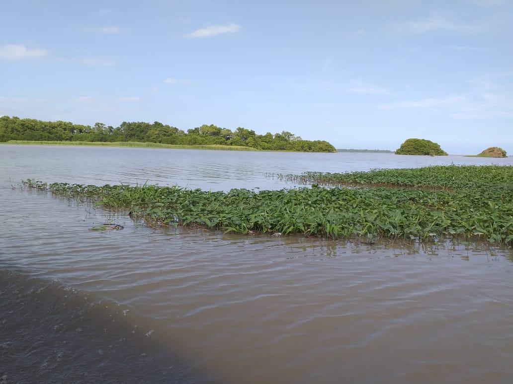 La Ciénaga Grande recibirá más agua dulce.