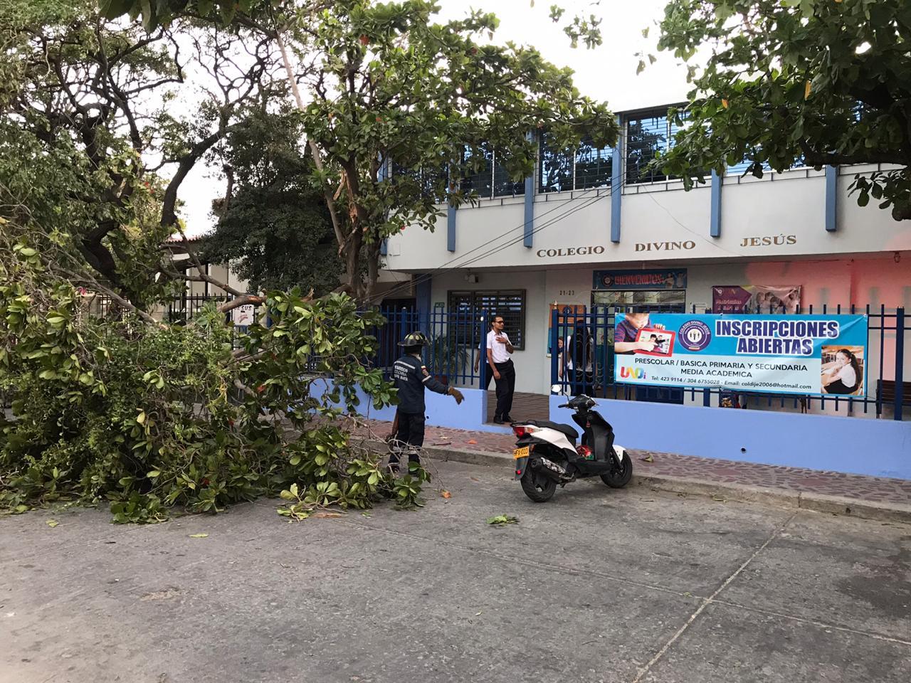 Caída de árbol en el colegio Divino Jesús