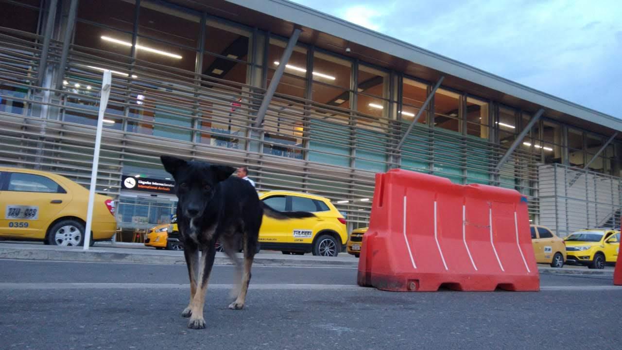 Los perros callejeros podrán ser de los que paguen los platos rotos del coronavirus.