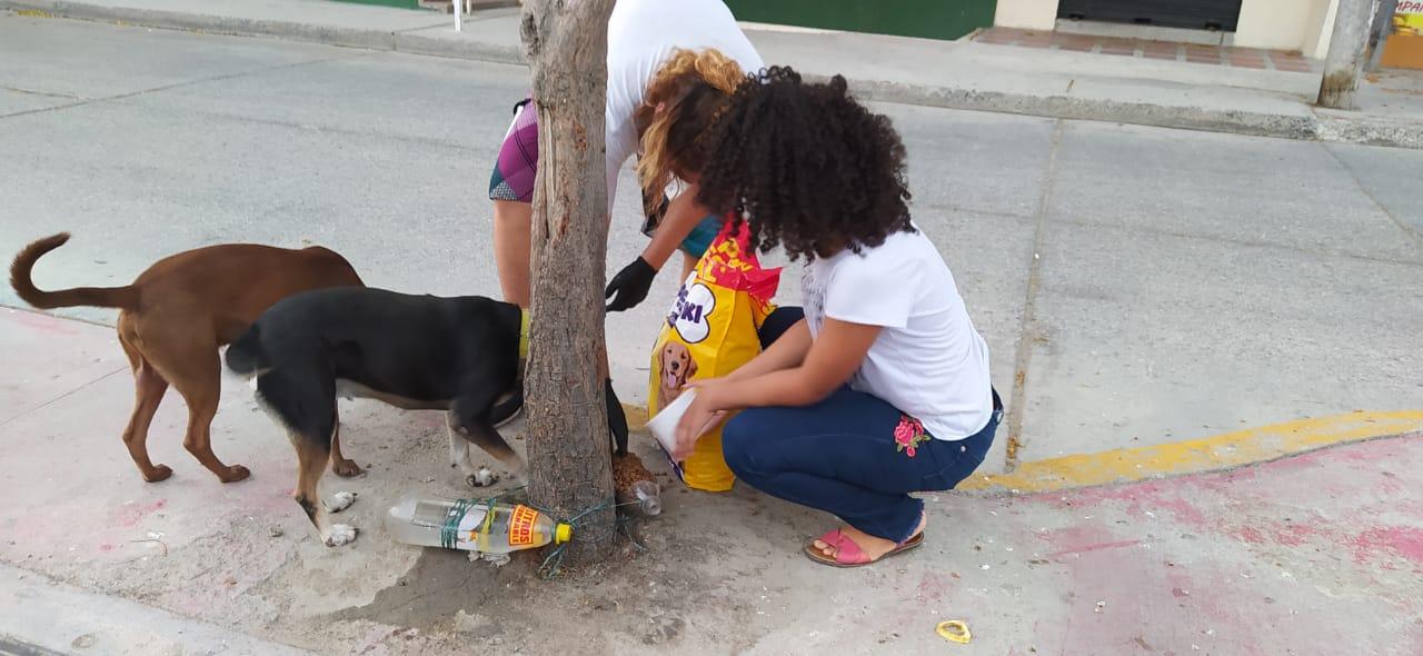Animalistas piden ayuda para seguir alimentando a los perros y gatos en condición de calle.
