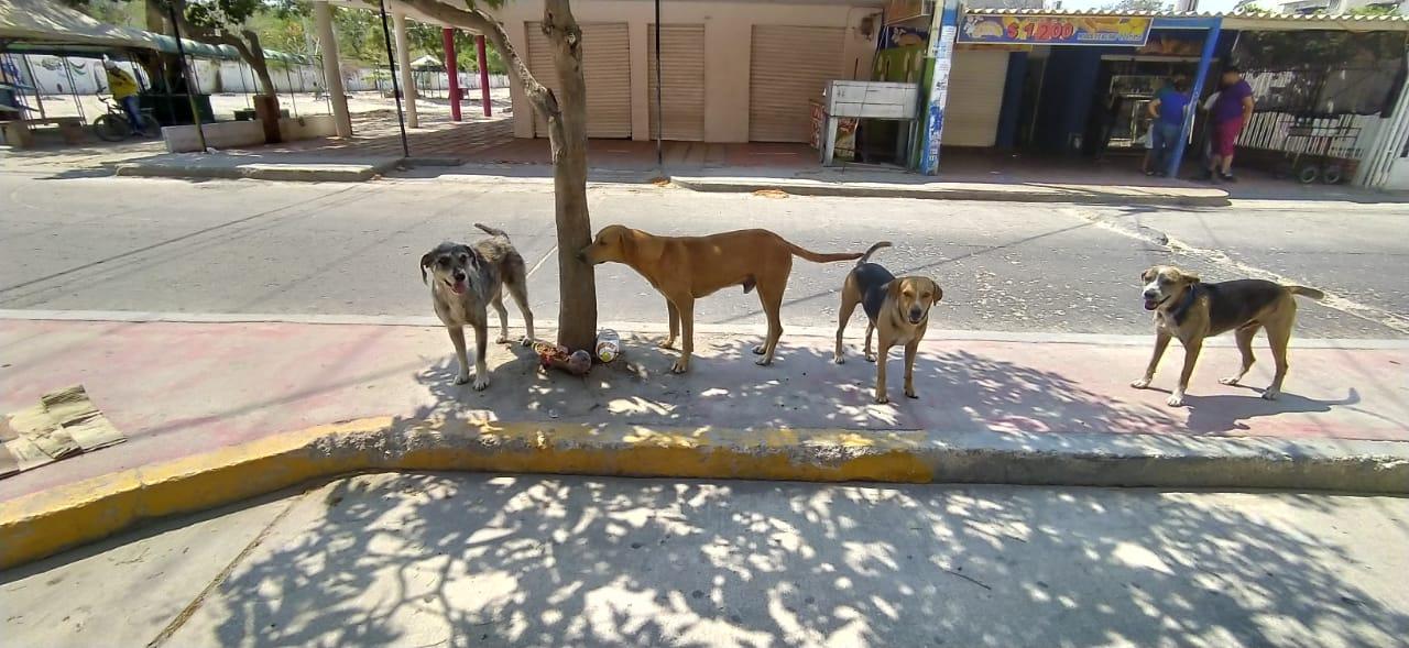 Animales en condición de calle.