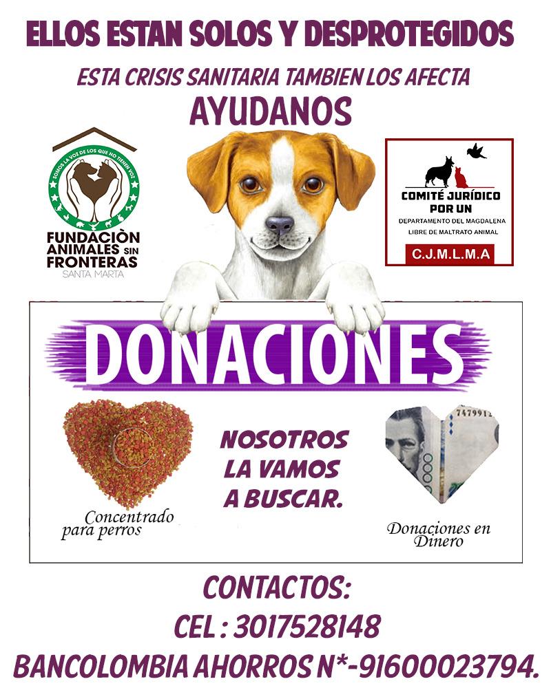 Campaña para ayudar a los animales de calle en Santa Marta.