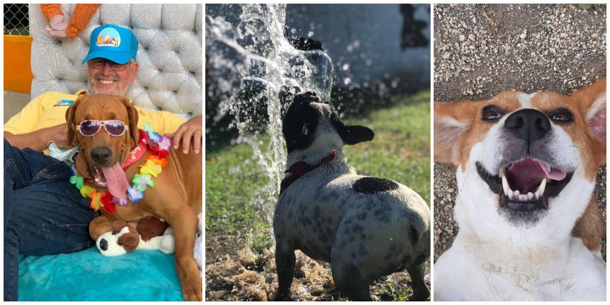 Este emprendimiento familiar es hoy la alternativa para aquellas familias que desean brindarle días de descanso, juego y diversión a sus mascotas.