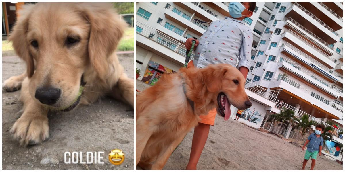 Goldie ahora tiene 7 meses, y gracias al entrenamiento recibido en Divertidogs, logró regular un horario para sus necesidades.