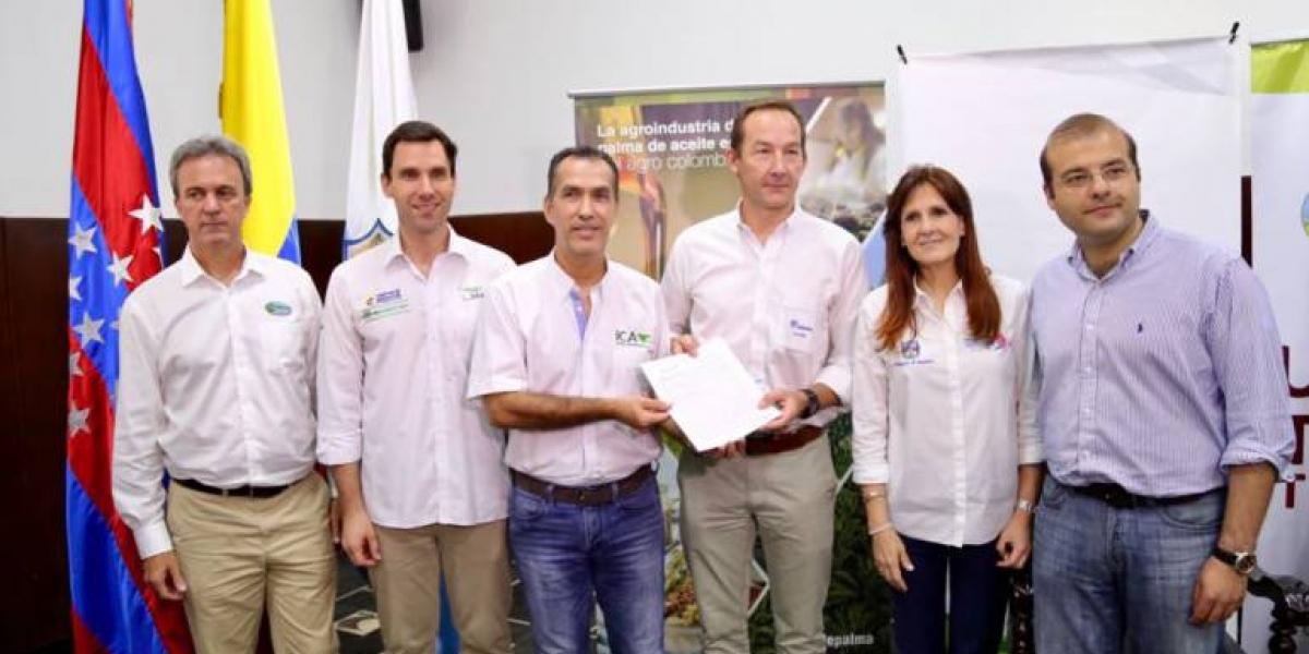 2 mil hectáreas de palma enfermas con pudrición de cogollo en Magdalena