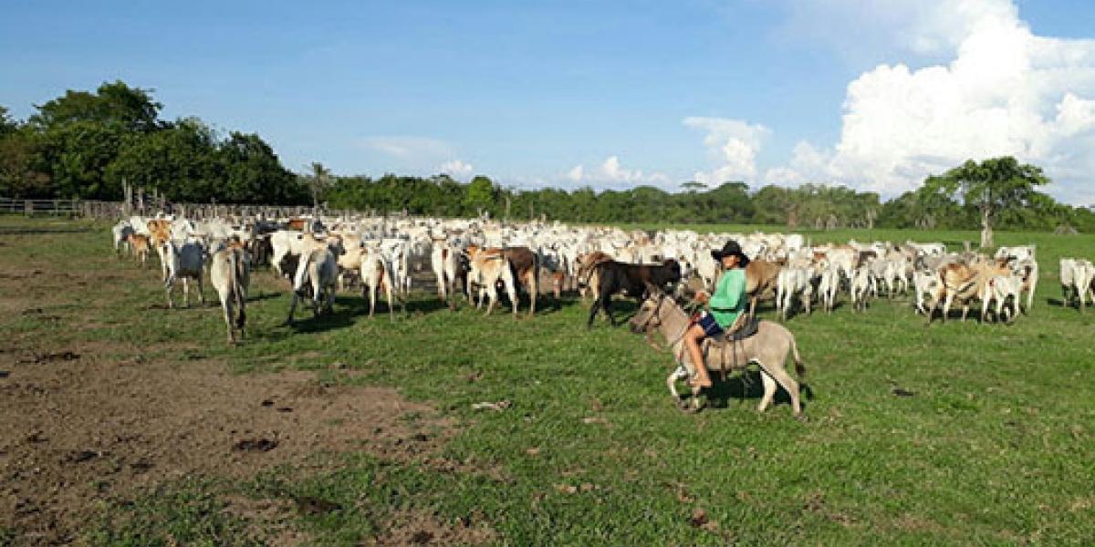 Zona de los llanos colombianos.