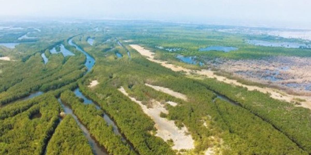 La Ciénaga Grande, es la laguna costera más grande de toda la cuenca del Caribe, con sus 500.000 hectáreas.