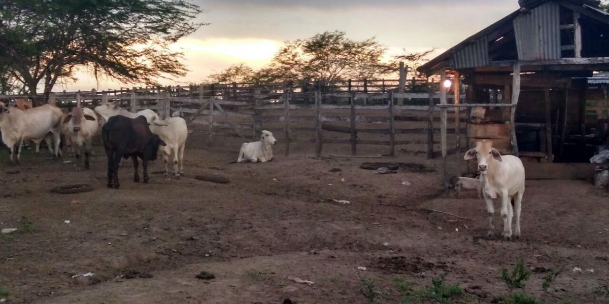 Predios recuperados en Sabanas de San Ángel, Magdalena.
