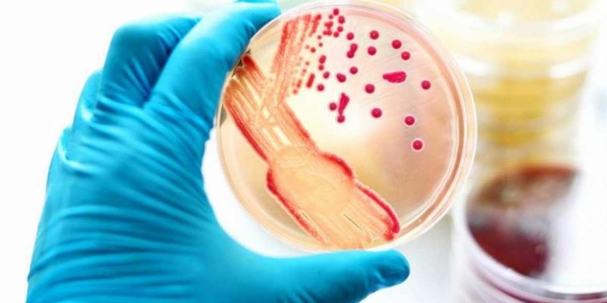 La gonorrea afecta a más de 70 millones de personas en el mundo.