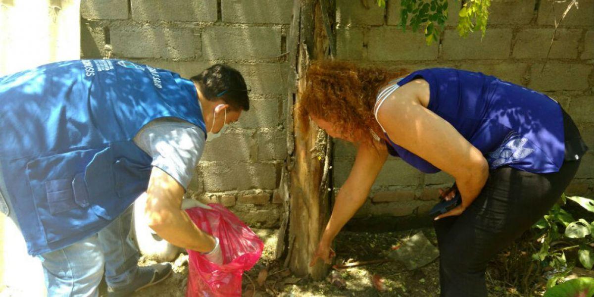 Funcionarios realizaron erradicación en el barrio Once de Noviembre.