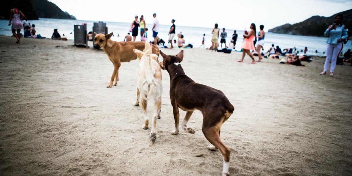 Los perros y gatos callejeros serán esterilizados.