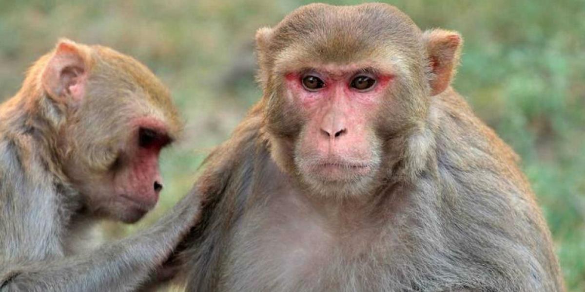 Familia De Hombre Al Que Mataron Unos Micos A Ladrizallos Clama