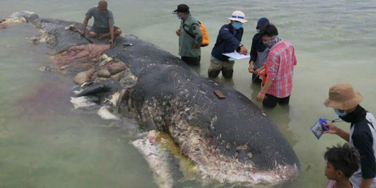 Entre los elementos que hallaron en el estómago del cetáceo estaban 115 vasos y cuatro botellas de plástico.