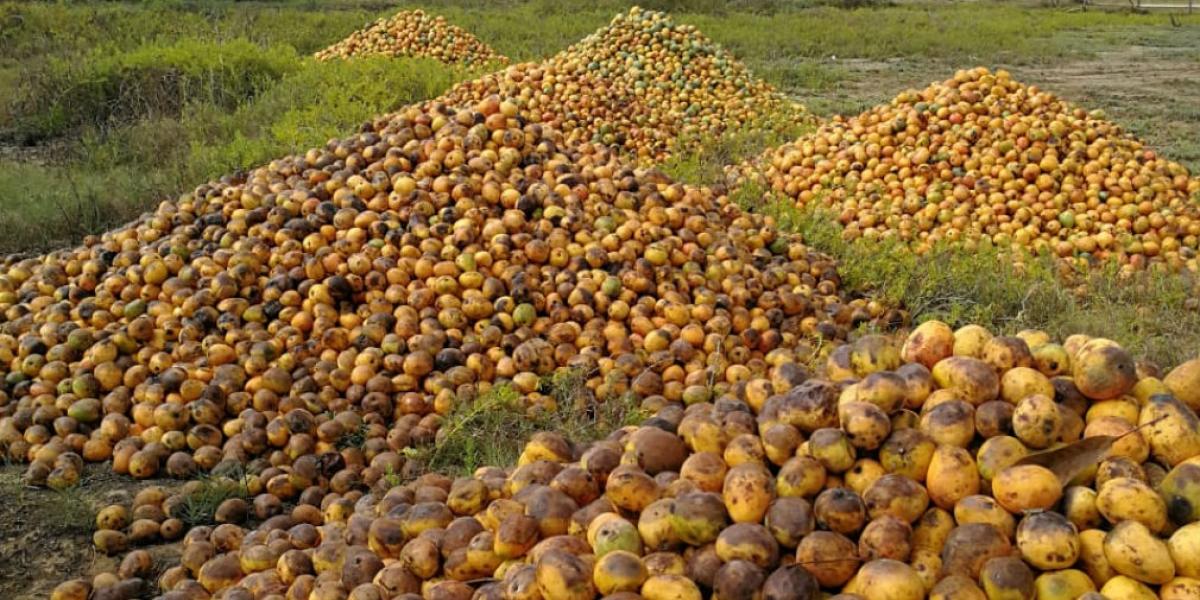 En cerros apilados está la producción de mango de varias fincas de Ciénaga y Zona Bananera.