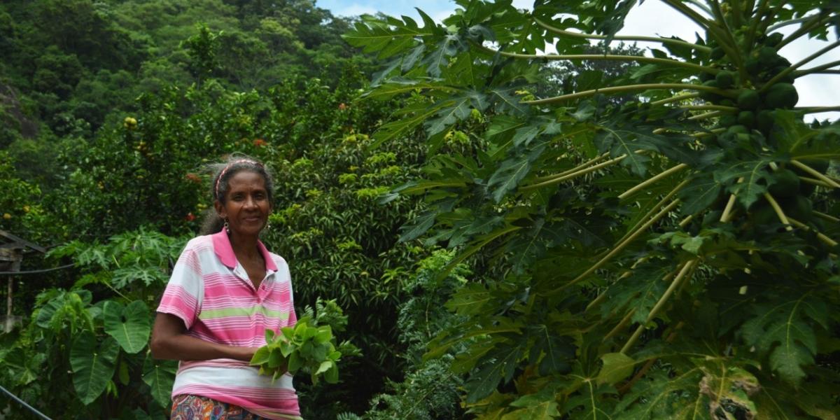 Maritza Quiroz tenía distintos cultivos en sus tierras restituidas.