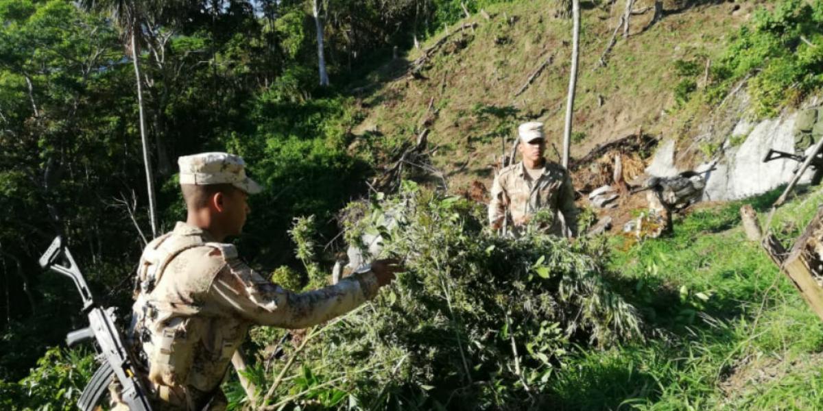 El Ejército Nacional junto al  Cuerpo Técnico de Investigación de la Fiscalía, erradicaron 5.228 matas de cultivos ilícitos