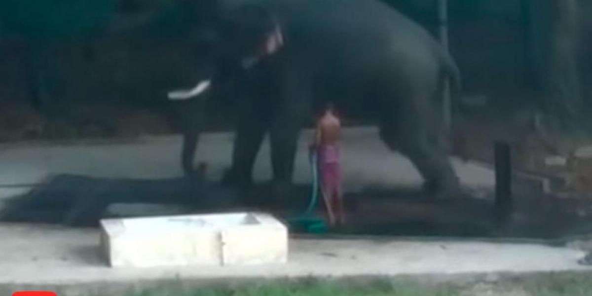 Hombre muere aplastado por elefante que bañaba en la India