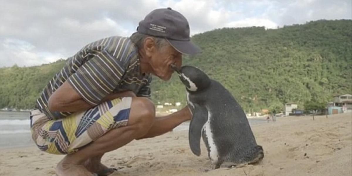 Dimdim pasa ocho meses al año con Joao y se cree que pasa el resto del tiempo en las costas de Argentina y Chile.