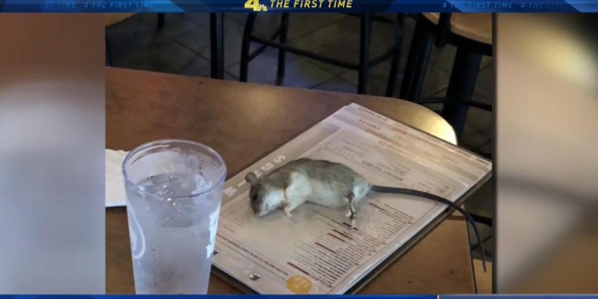 Esta es la foto de la rata apenas cayó en la mesa del restaurante. Aún estaba viva.