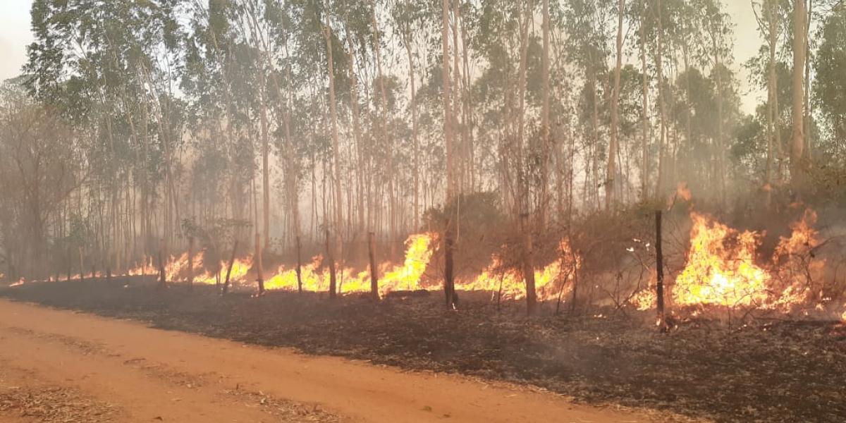 El Magdalena se ha visto afectado fuertemente por los distintos incendios forestales que se han registrado