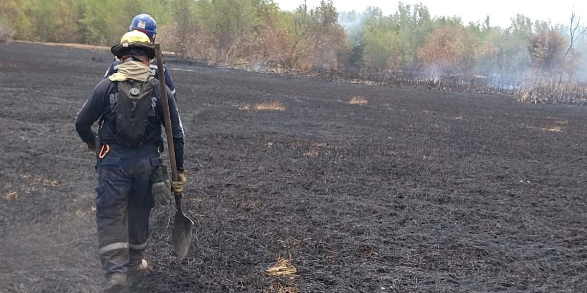 3o hectáreas de enea ha afectado el incendio.