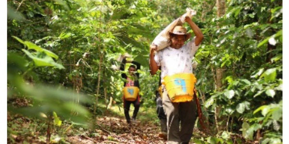 El trabajo de estos campesinos, ahora productores de café, dio como resultado un gran logro para la asociación, la firma de un contrato con la Federación Nacional de Cafeteros para exportar 105.000 kilogramos de café orgánico.