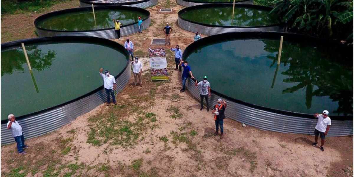 Mensualmente esperan obtener una producción de entre 8 y 12 toneladas del cultivo de Tilapia Roja.