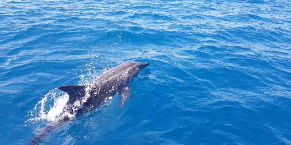Dos especies de delfines han sido avistadas.