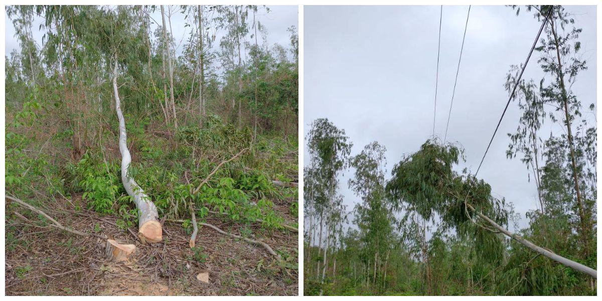 Árboles caídos por tala de dueños de fincas han ocasionado cortes de energía.