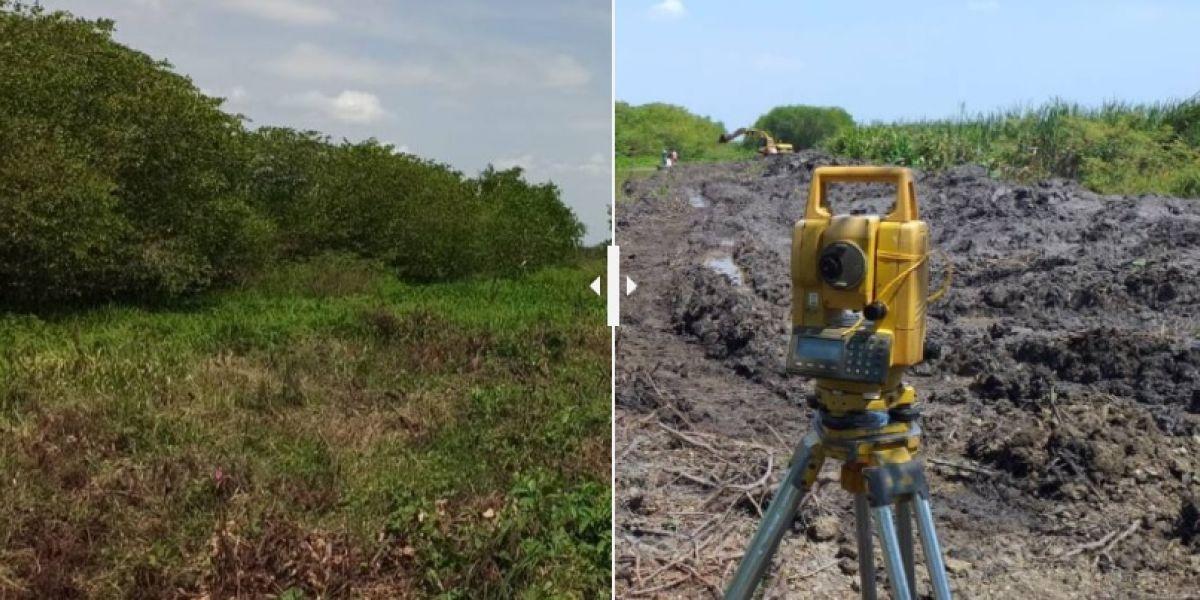 El antes y el después de Caño Ciego, en la Ciénaga Grande de Santa Marta.