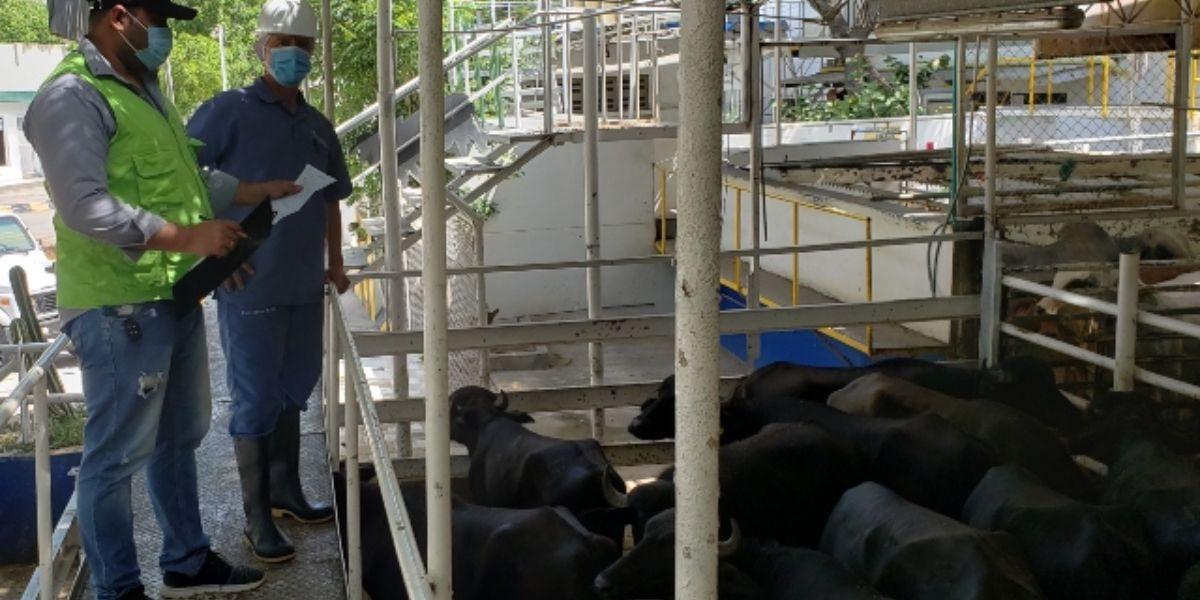Funcionarios del ICA visitaron la planta de beneficio Pesmar, Frigorodeo, ubicada en Santa Marta.