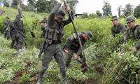 Más de 2.000 hombres de la Fuerza Pública adelantan la erradicación forzada de matas de coca en Tumaco.