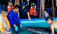 Momentos en que el delfín es auxiliado.