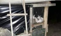 La Jaula de conejos donde fue encerrado el niño de 8 años.