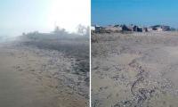 La mortandad de peces se presentó el pasado 12 de febrero en Tasajera.