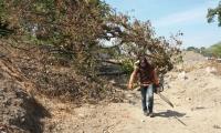 La entidad ambiental suspendió las labores de tala.