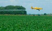 La aspersión aérea con glifosato estaba suspendida en Colombia.