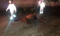 Personal de Electricaribe llegó al lugar después de que se reportó la muerte de la yegua.