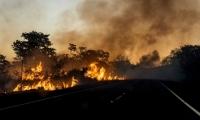 El que más ha perdido hectáreas es el estado de Mato Grosso, con 5.955.