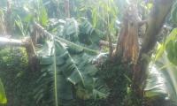 Más 50 hectáreas de cultivos fueron afectadas.