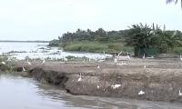 Las aves han retornado a la Ciénaga con la apertura de la embocadura del caño clarín viejo.