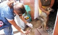 Inician campaña para vacunar a perros y gatos en el Magdalena.