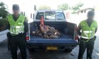 Parte de la carne decomisada en El Piñón y Tenerife.